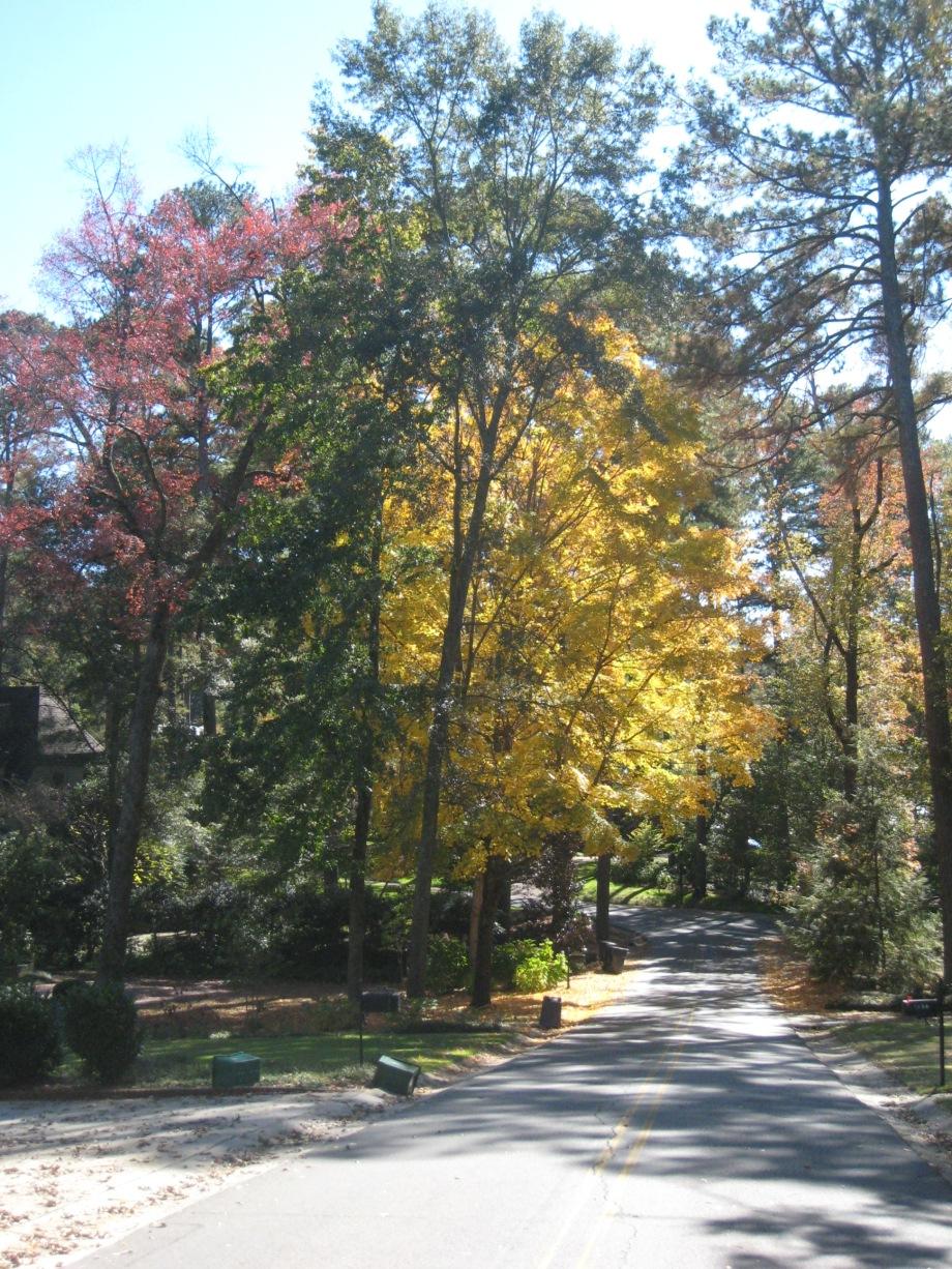 tracery fall 2009 141